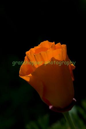 Spring Color 2009