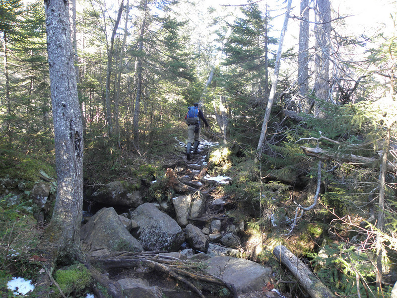 Trail finally levels, but gets rocky and rooty