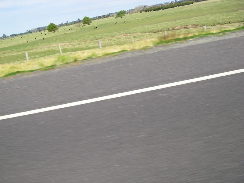 Sydney trip and Mirimbula 013.JPG