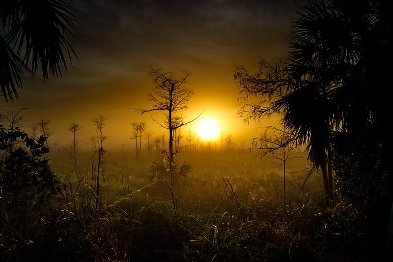 Big Cypress National Preserve, Florida, Loop Road