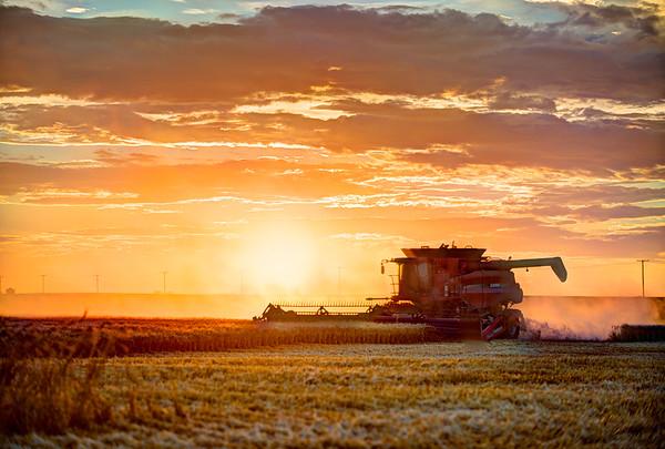 LeBlanc Harvest