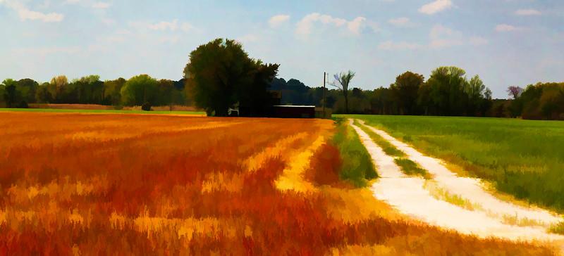 Red Fields 2.jpg