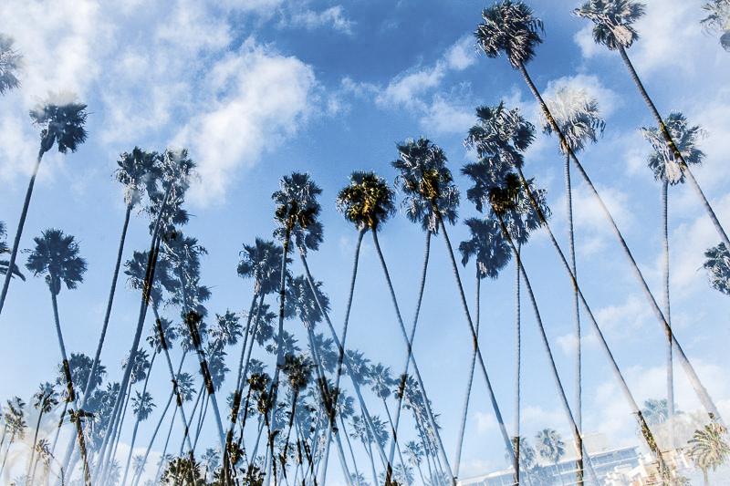 December 6 - California Palms.jpg