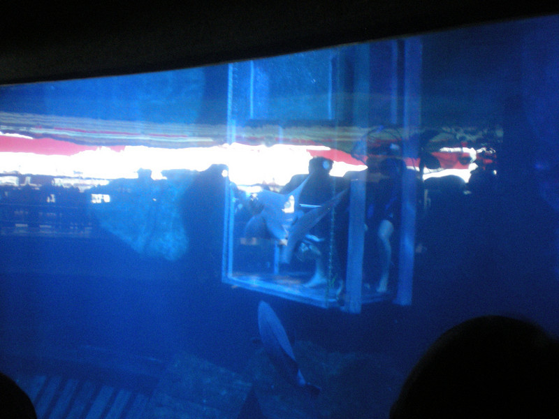 You can pay to go in a box and get lowered into the shark tank to feed the sharks.  Anyone?  Anyone?