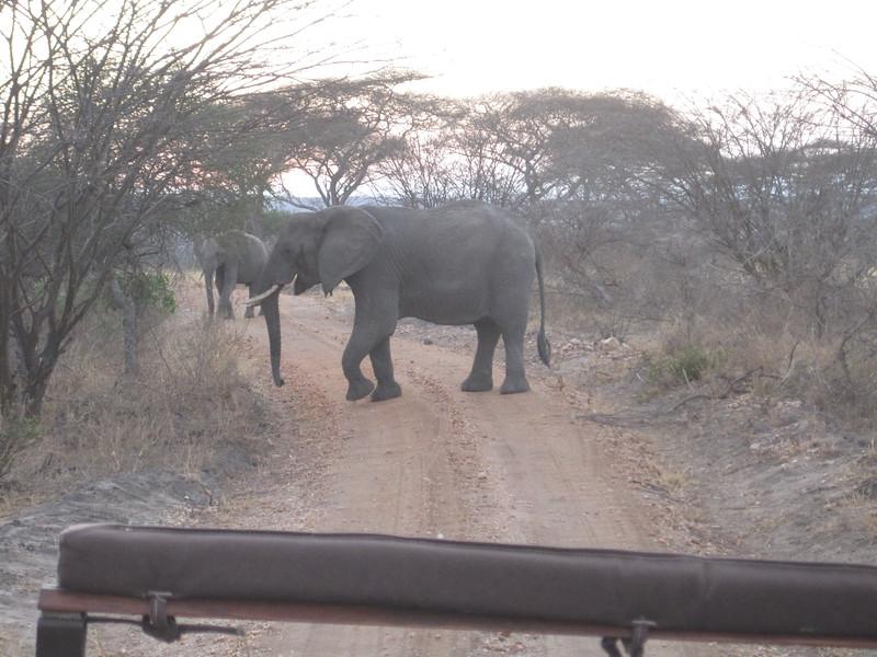 Tanzania14-3237.jpg