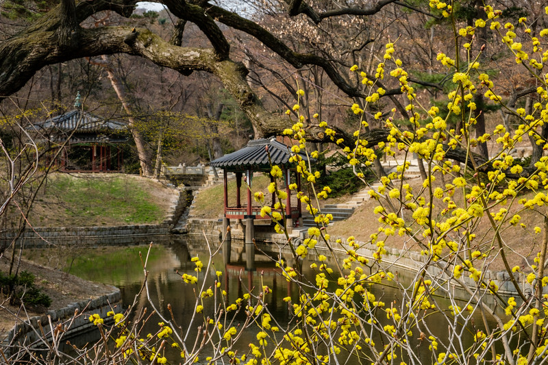 20170325 Changdeokgung Palace 138.jpg