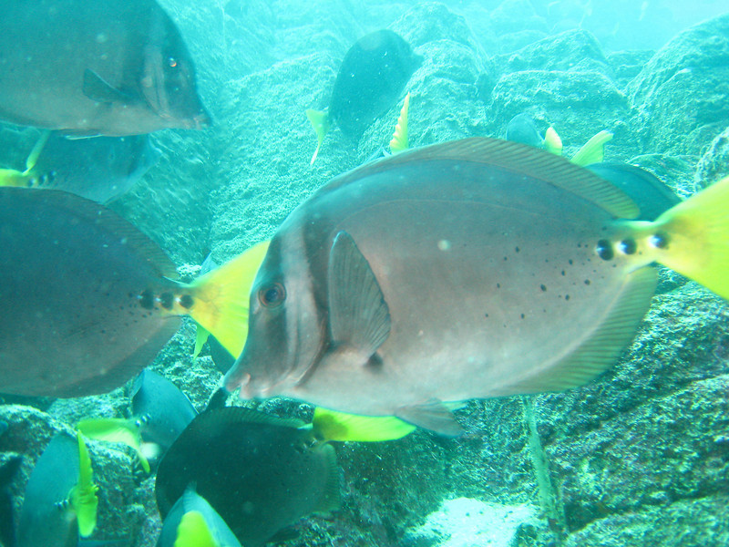 Diving in the Galapagos (137 of 392)