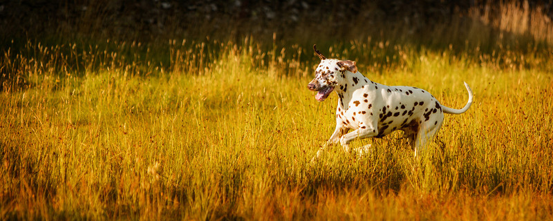 dog_photographer_scottish_borders_parris_photography.jpg