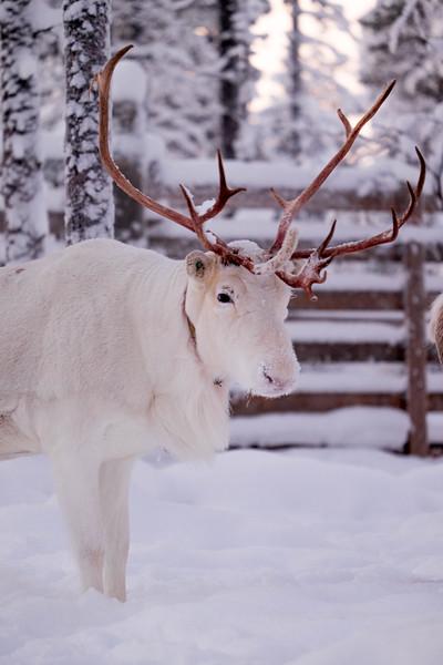 Finland_160117_98.jpg