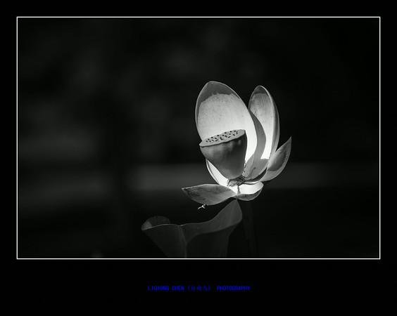 _MG_8786-ps-M.jpg
