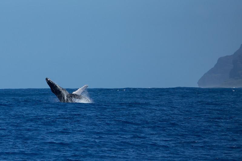 whales-leila-48.jpg