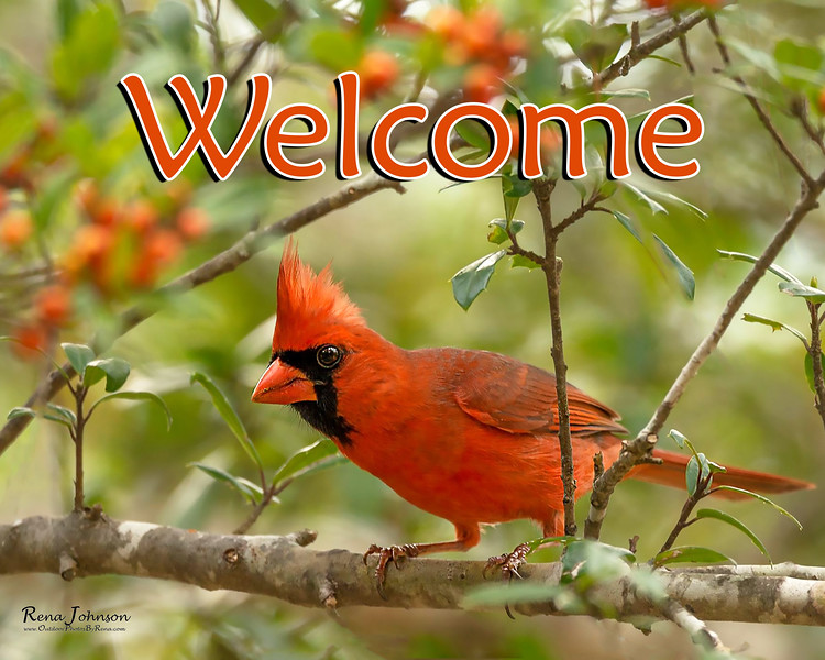 RJP-Cardinal-WhatchaLookingAt-004 - Welcome JPEG.jpg