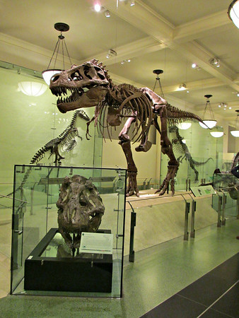 New York - 2012 - American Museum of Natural History