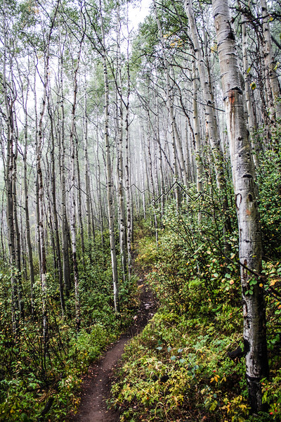 Aspen Grove, East Lake Creek, CO