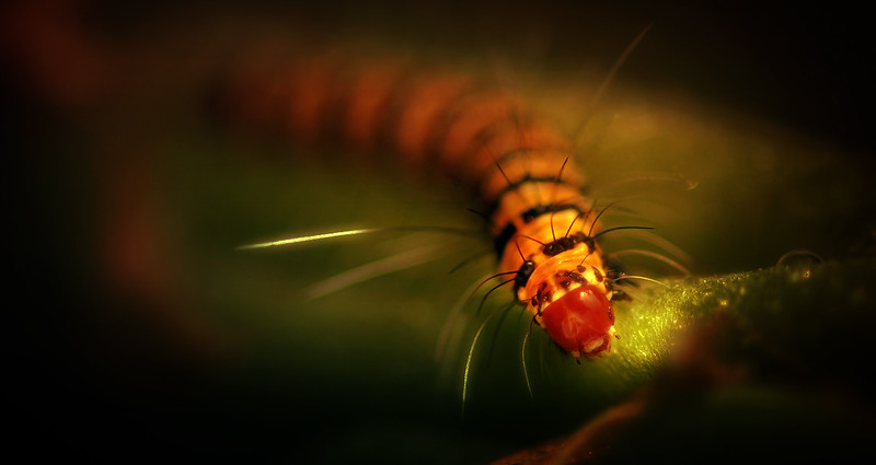 Paintography of Bugs by Ray Bilcliff - www.trueportraits.com