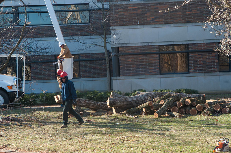 March 14, 2018 Big Tree7.JPG