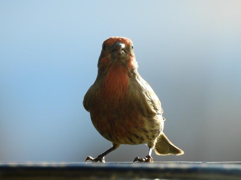 birds (190).JPG