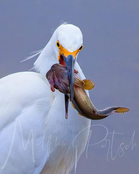 A slimy Taco. #birds #igbirds #birding #birdnerd #birdwatching #birdwatcher #birdphotographer #birdphotography #pocket_birds #birdsofinstagram #naturelovers #naturephotos #naturephotography #naturephotographer #wildlife_captures #wildlifephotography #wildlifephotographer #featheredfriends #welovebirds #nikond500 #nikonnature #nikonnofilter #eye_spy_birds #birdbrilliance #yourbestbirds