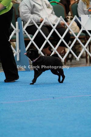 Pug Dog Club of America National Rally Trial