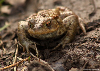 Frogs and Toads Set 2