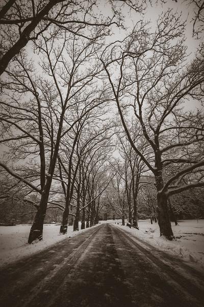 ManeyDigital_Winter Squall-25.jpg