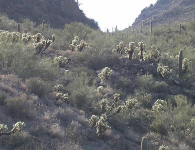 Tucson 04-06