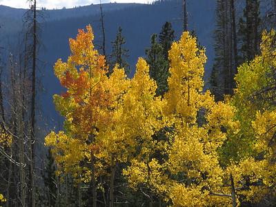Pitkin Creek Sept '14