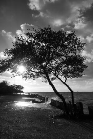 Terra Ceia Bay  Black & White(new)