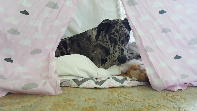 Lady in Tent.jpg