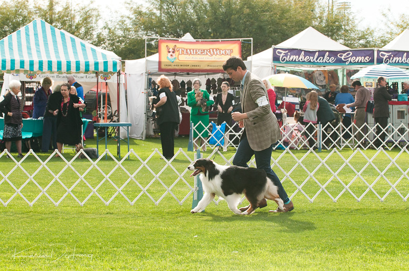 20170114_Kachina Kennel Club_Aussies-33.jpg