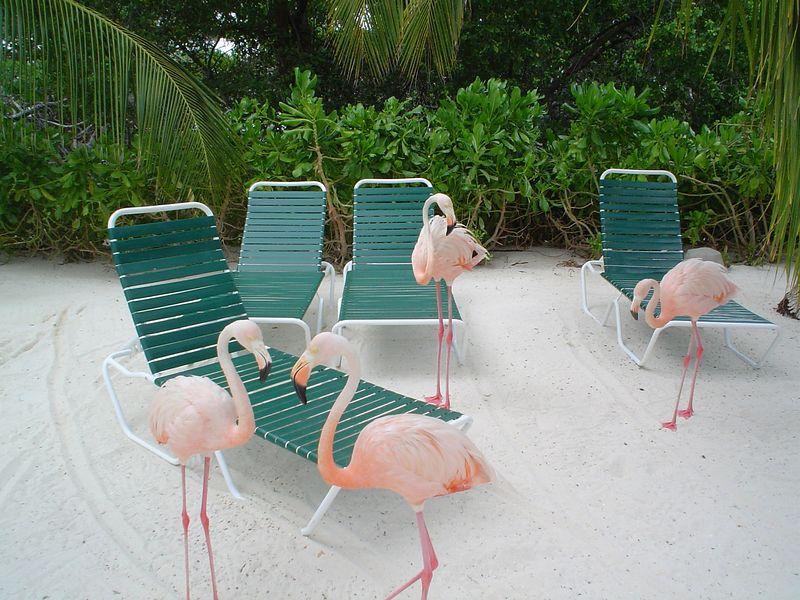 Aruba 2005 027.jpg