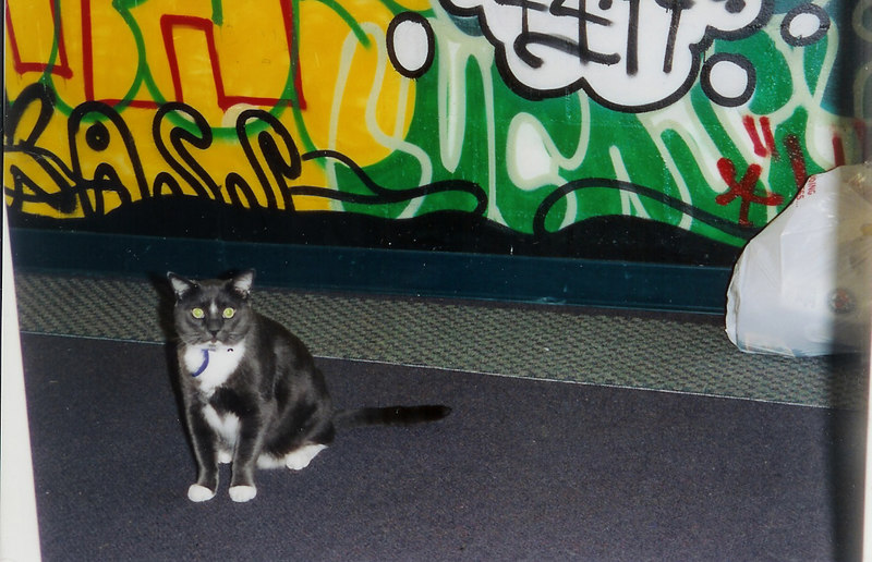 Simon the cat, who lived on third floor Holt for the 2002-2003 school year.