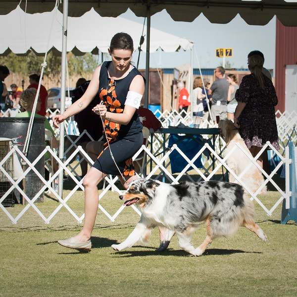 20171125_USASA Specialty_Scottsdale Kennel Club_DSC7686-8.jpg