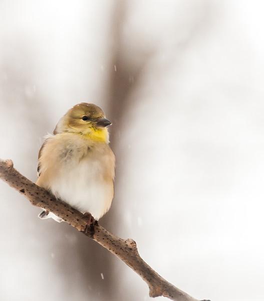 bird2 4x6.jpg
