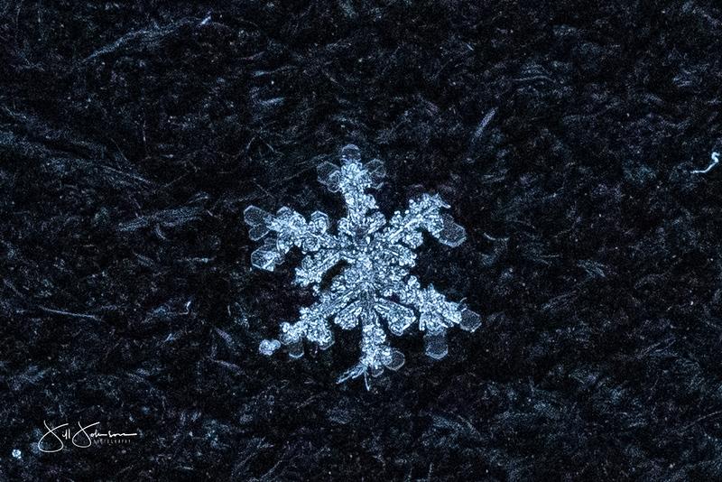 snowflakes-1399.jpg