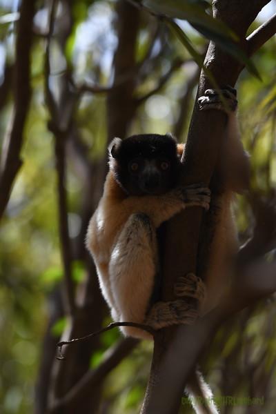 Madagascar 2017 (16)