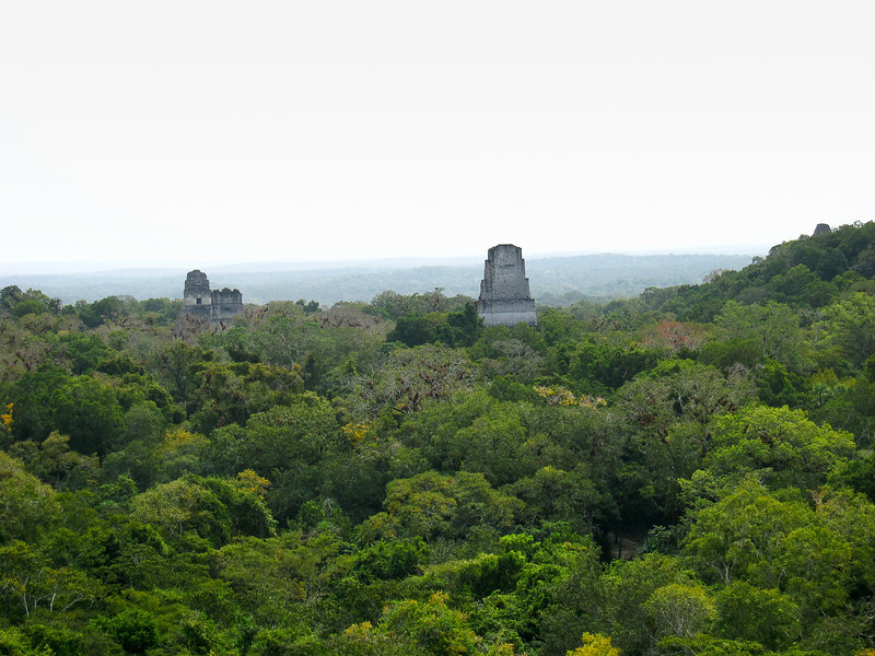 Sweeping views from the top of a temple at Tikal