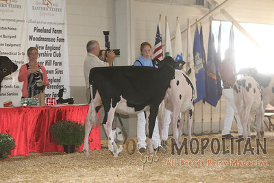 Big E Holstein Heifers 2016