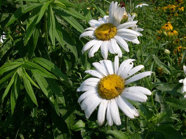 My Flower Garden 2005