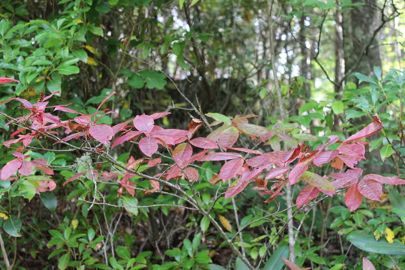 Buck Creek 065.jpg