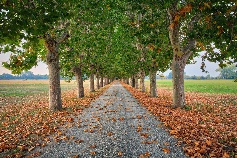 Autumn Lane in Piedmont, Italy