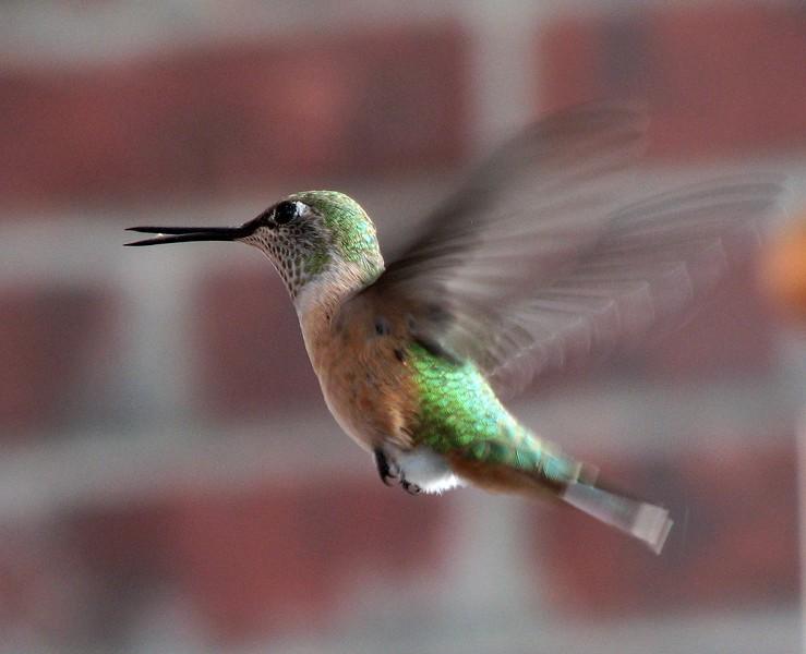 birds (154).jpg