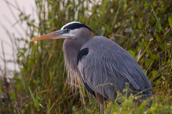 2008 - Everglades National Park, February