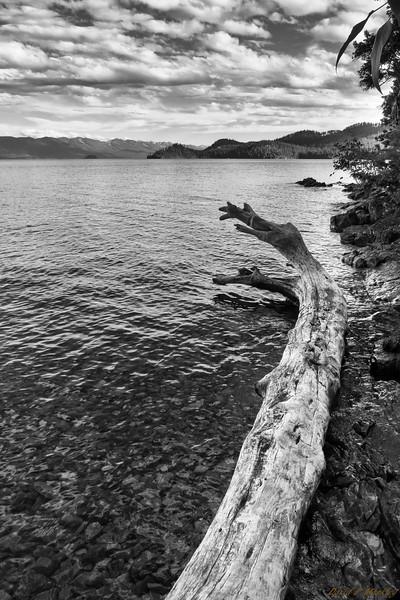 Abandoned Log