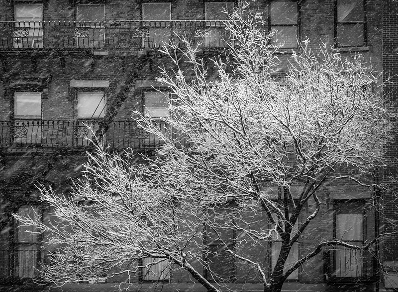 Brooklyn-Snow-2015-03-(20-of-23).jpg