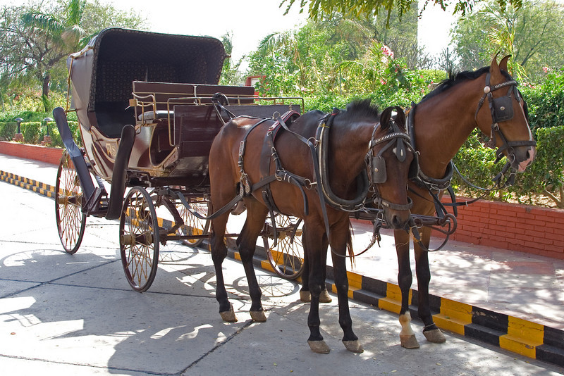 Sheraton Horse and Buggy.jpg