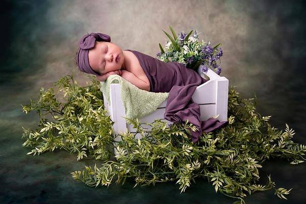 Hattie Newborn Portraits