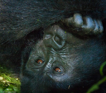Bwindi - Rushegura Gorilla Trek 2