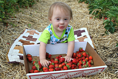 Strawberry Picking 2017