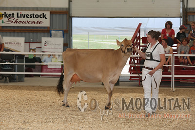 Ontario Summer Jersey Cows 15